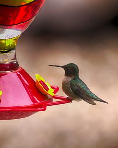 Image of hummingbird on feeder